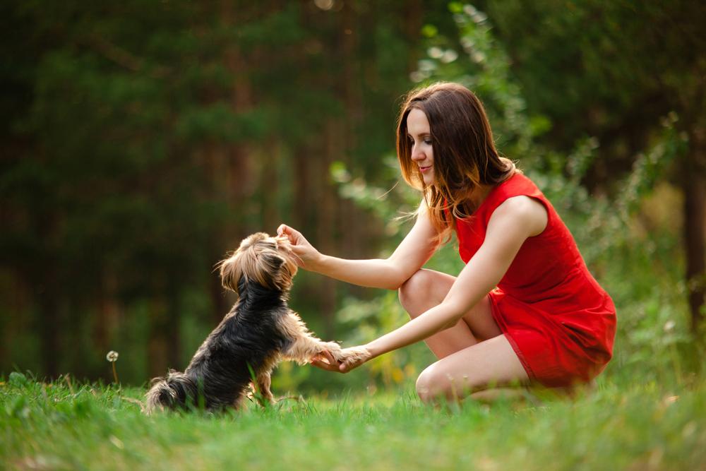 reward-dog
